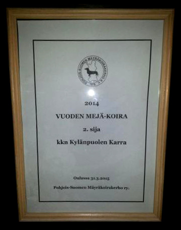 Kylänpuolen Karra 2014 vuoden MEJÄ-koira 2. sija